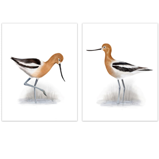American Avocet Bird Art Prints - Studio Q - Art by Nicky Quartermaine Scott