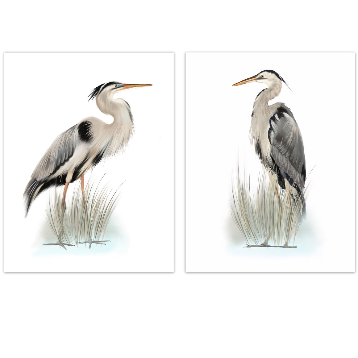 Great Blue Heron Bird Art Prints - Studio Q - Art by Nicky Quartermaine Scott