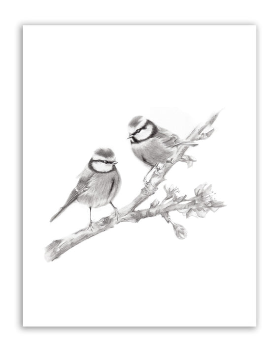 Two Birds on Branch Pencil Drawing Print - Studio Q - Art by Nicky Quartermaine Scott