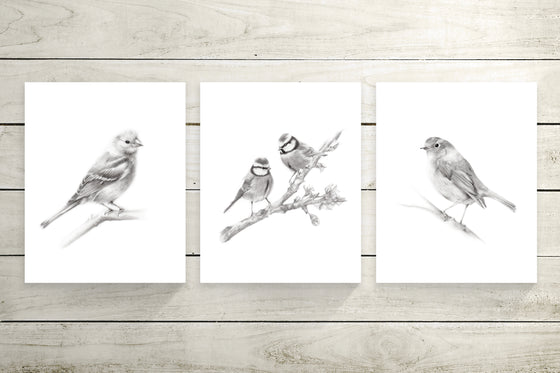 Grey Bird Art Prints - Studio Q - Art by Nicky Quartermaine Scott