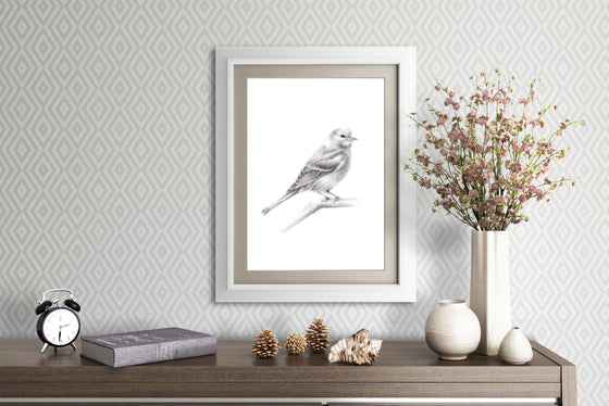 Chaffinch Bird Sketch - Studio Q - Art by Nicky Quartermaine Scott