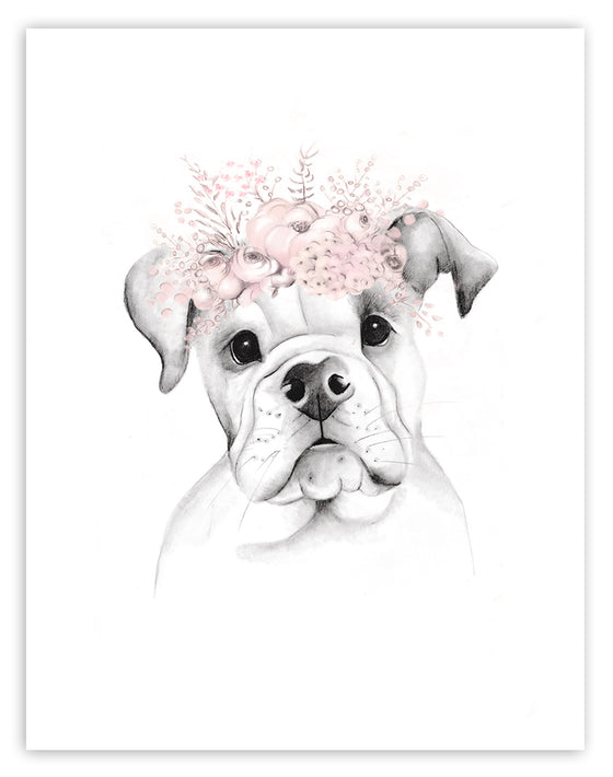 American Bulldog Puppy Sketch - Studio Q - Art by Nicky Quartermaine Scott