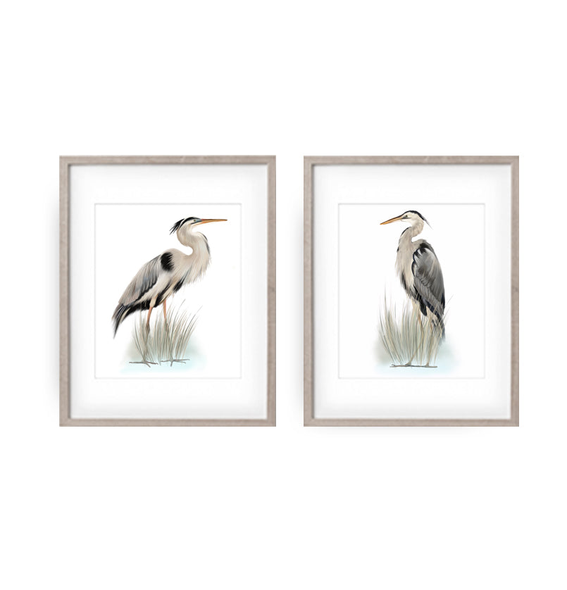 Grey Blue Heron Bird Art Prints - Studio Q - Art by Nicky Quartermaine Scott