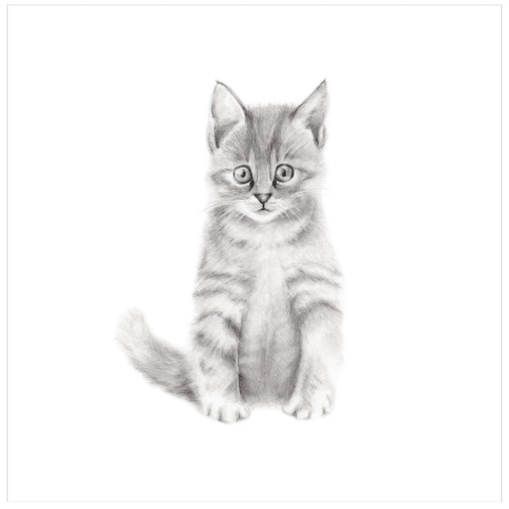 Kitten Pencil Drawing Print - Studio Q - Art by Nicky Quartermaine Scott