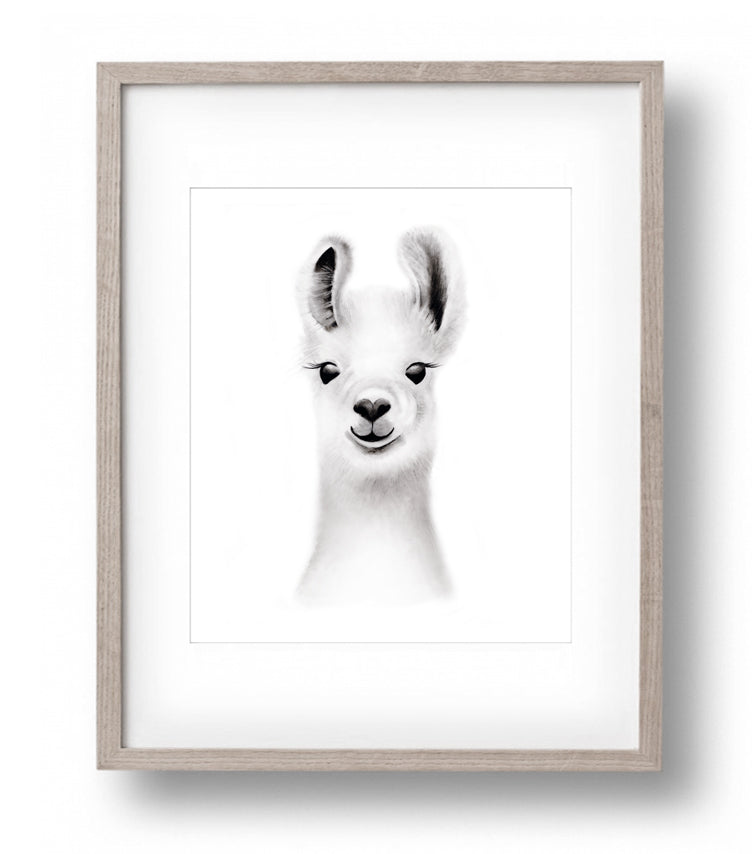 Llama Sketch Fluffy Face Print - Studio Q - Art by Nicky Quartermaine Scott