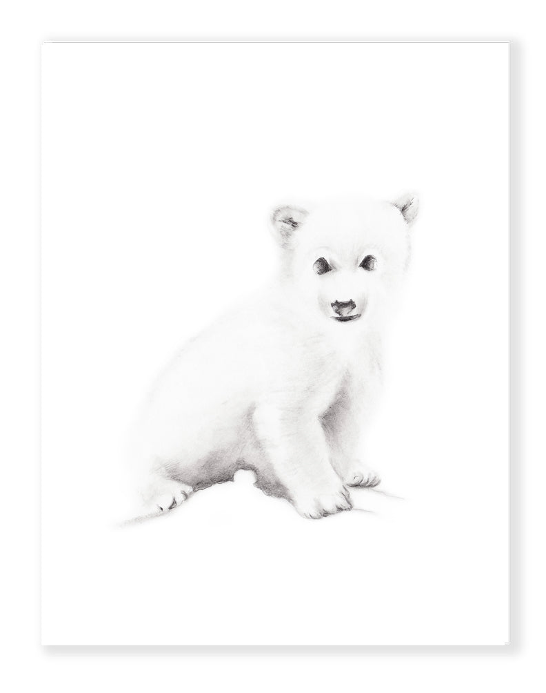 Polar Bear Pencil Sketch Print - Studio Q - Art by Nicky Quartermaine Scott