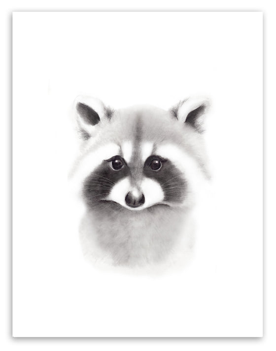 Raccoon Sketch Fluffy Face Print - Studio Q - Art by Nicky Quartermaine Scott