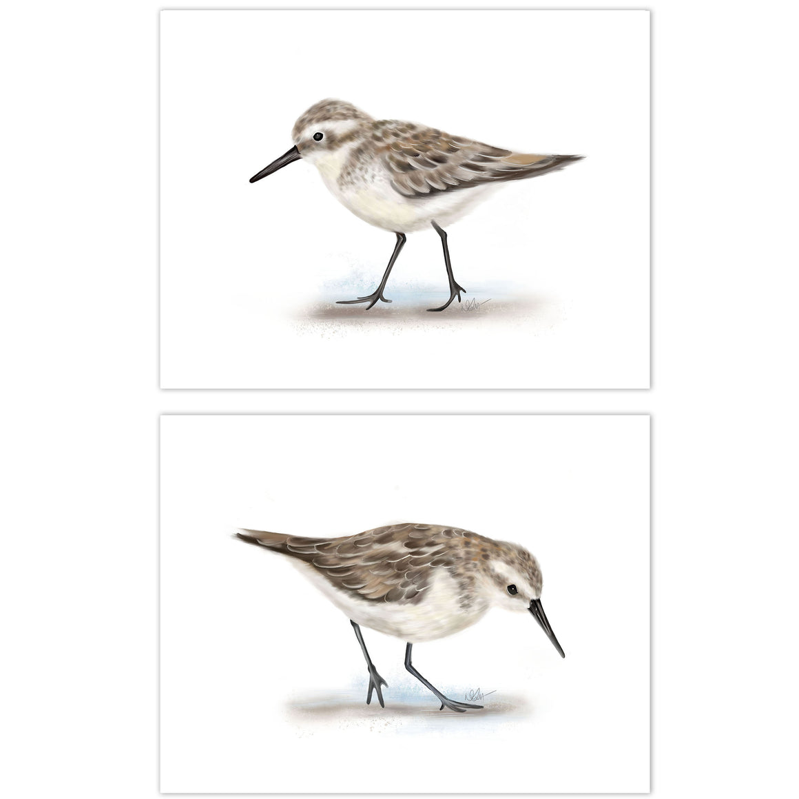 Sandpiper Bird Art Prints - Studio Q - Art by Nicky Quartermaine Scott