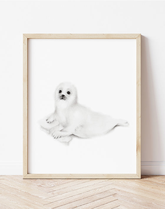 Baby Seal Cub Pencil Drawing - Studio Q - Art by Nicky Quartermaine Scott