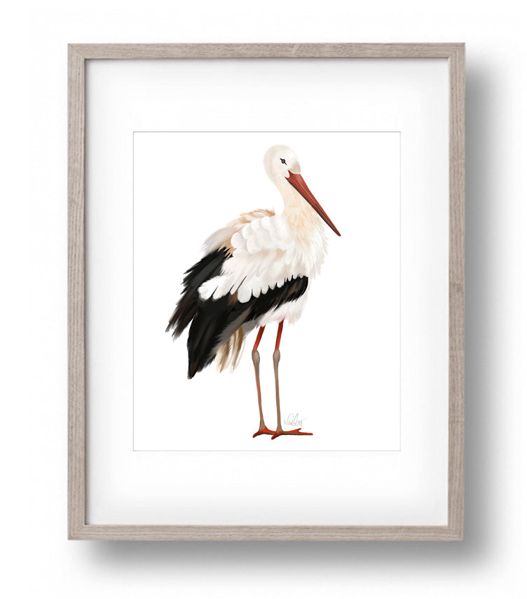 Stork Bird Print - Studio Q - Art by Nicky Quartermaine Scott
