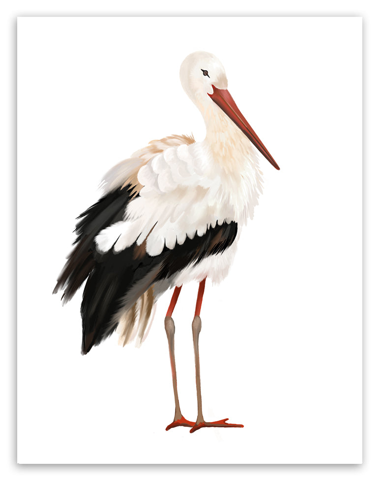 Stork Art Print - Studio Q - Art by Nicky Quartermaine Scott