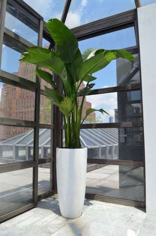 Bird of Paradise - Rooftop NYC