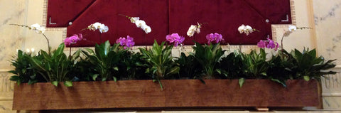 Orchid Display with Green Foliage