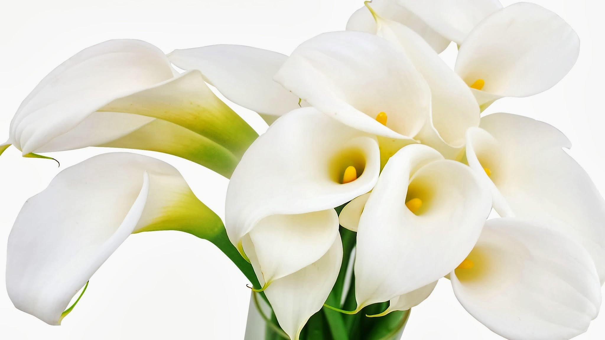 calla-lilies-flowers