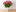 1 Dozen Long-Stemmed Roses in Vase -thumbnail