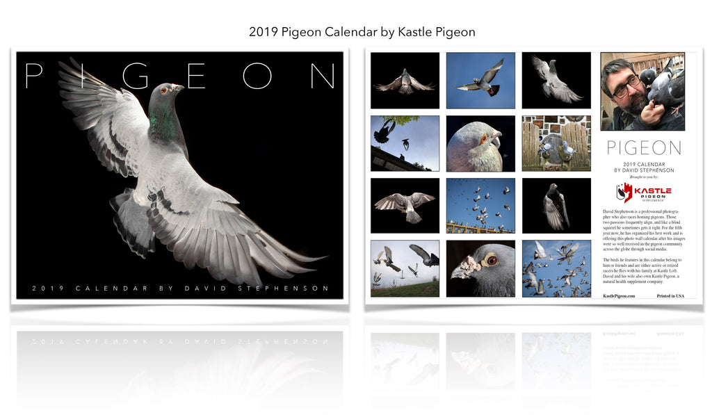 Our 2019 Pigeon Photo Wall Calendar is hot off the press