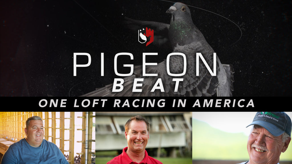 Pigeon Beat trailer for Episode 1 is released