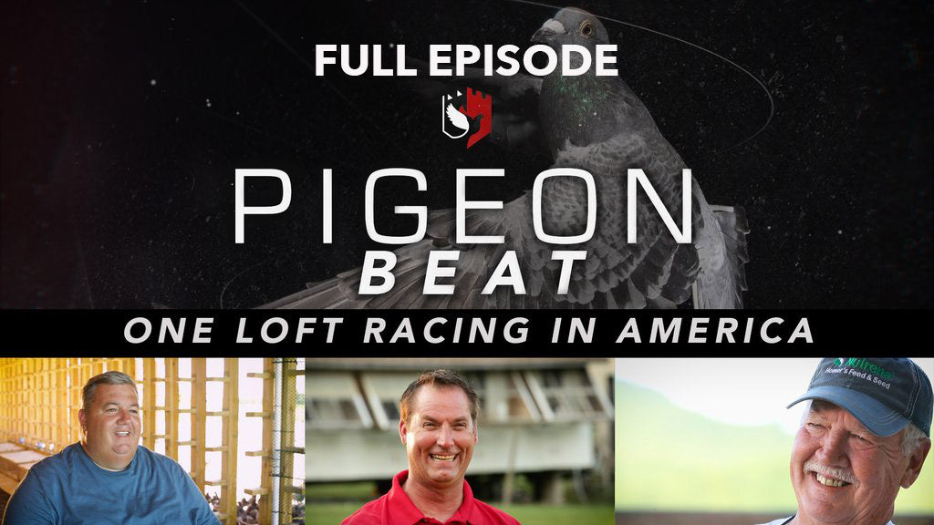 Pigeon Beat: One Loft Racing in America FULL episode