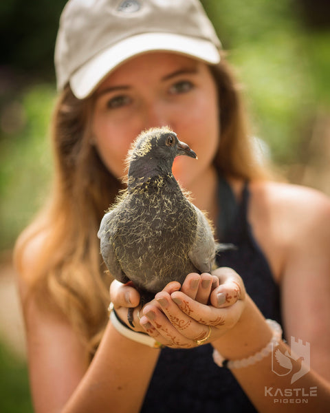 baby weanling homing racing pigeon
