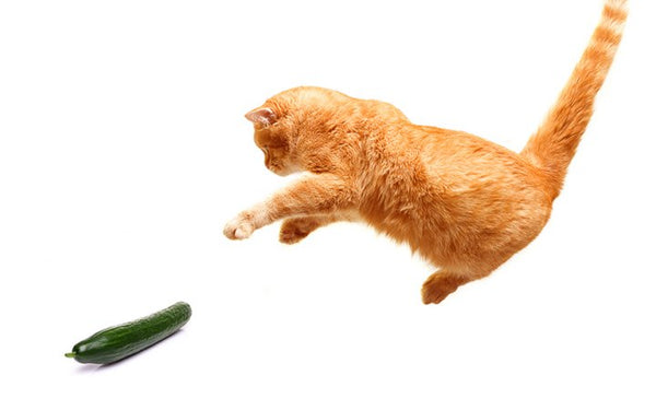 cat vs. cucuumber