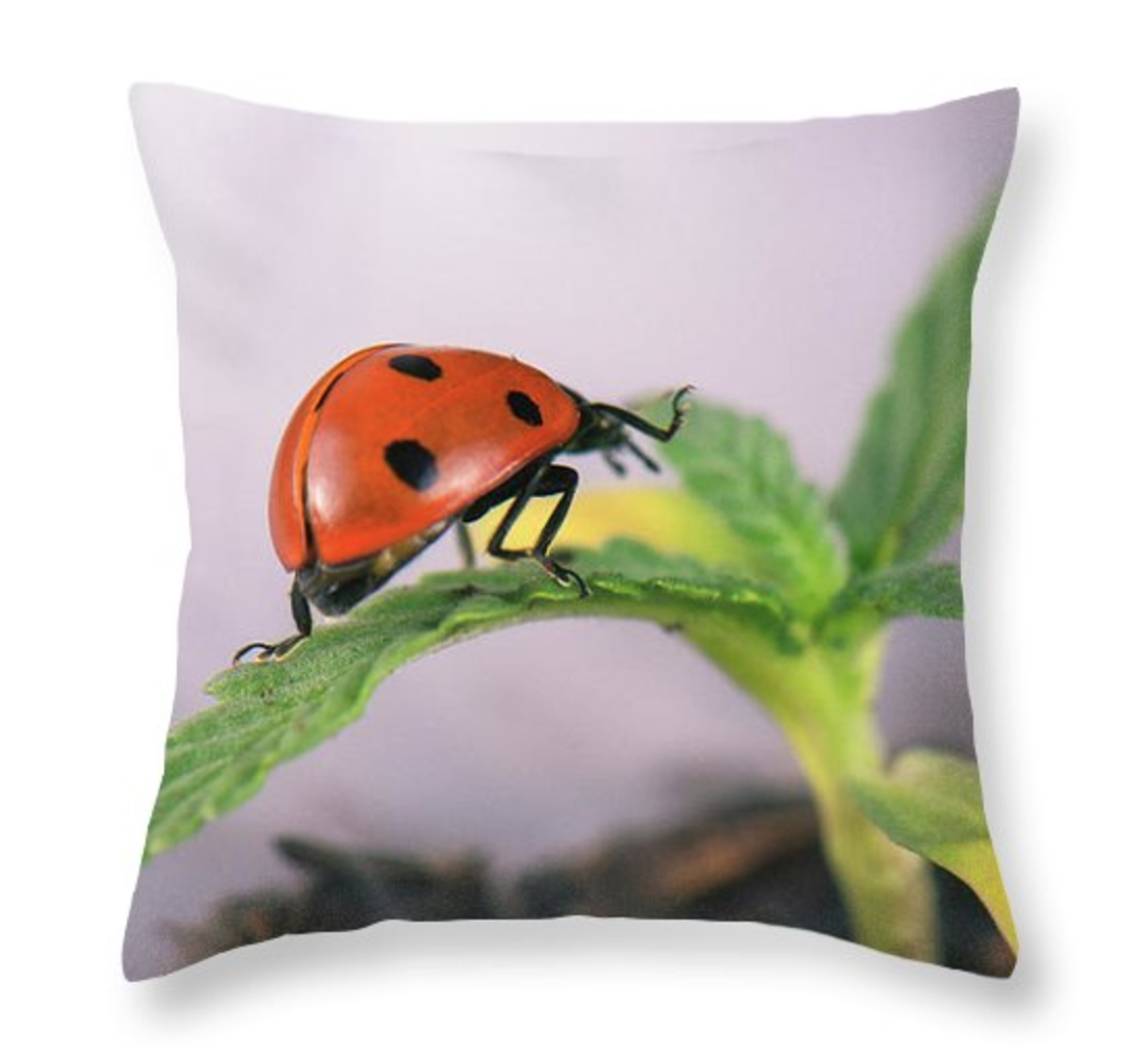 Lady Sprout Pillow