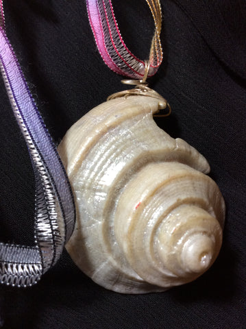 Golden Ratio Conch Shell Pendant