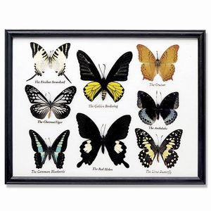 8 Butterfly Specimens on Cotton Back Wooden Frame
