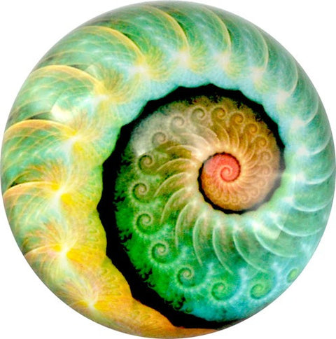 "NAUTILUS ART GLASS PAPERWEIGHT 3""Dia"