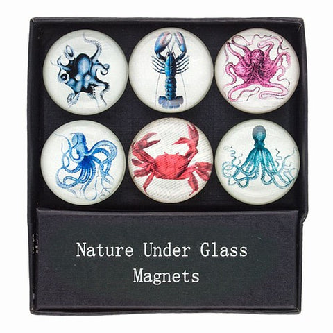 "GLASS SEALIFE MAGNETS GIFT SET 1.375""Dia"