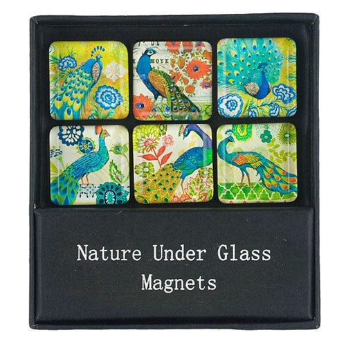 "PEACOCK GARDEN GLASS MAGNET GIFT SET 1.25"" Sq"