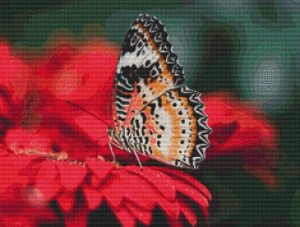 Butterfly - Pattern and Print