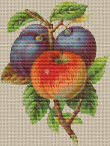 Plums and Apples