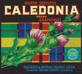 Caledonia Grapefruit Label - Pattern and Print