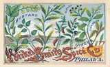 Weikel and Smith Spice Co. Trading Card - Pattern and Print