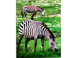 Double Pocket Folder Paper Laminated Wild Animals