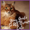 Your All in One Guide to All Brown Cats