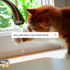 Why Cats Have Low Thirst Drive