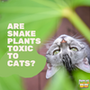 Are Snake Plants Toxic to Cats?