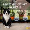 How to Keep Cats Off Counters?