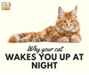 Here's Why Your Cat Keeps Waking You Up in the Middle of the Night