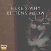 Here's Why Cats Meow!