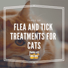 Types of Flea and Tick Treatments for Cats