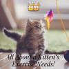 All About a Kitten's Exercise Needs!
