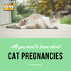 All You Need to Know About Cat Pregnancies