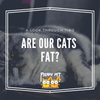 Are Our Cats Fat?: A Look at Today's Cats