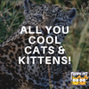 Hey All You Cool Cats and Kittens!