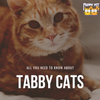 All You Need to Know About a Tabby Cat