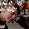 Cat Behavior 101: Why Do Cats Headbutt?