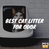 Best Cat Litter for Odor