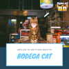 A Quick Look at the Bodega Cat